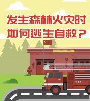 发生森林火灾时如何逃生自救?