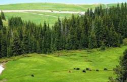 黑龙江省发布2021年度森林草原防火命令